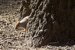 _MG_3648 (1) (A Life of Cyn) Tags: squirrel nuts treetrunk mdpd2014 mdpd201411