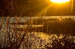 Berry Shoals * (Explore 11/8/2014) (ArmyJacket) Tags: sunset lake water landscape southcarolina upstatesc