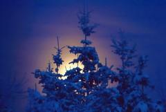 Wilderness Moonrise . . . (JLS Photography - Alaska) Tags: trees sky moon alaska night december skies luna moonrise nightsky alaskanscenery jlsphotographyalaska