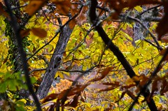 variety autumn colors (javituero) Tags: fall puente otoo mogarraz supersix caminodelagua nikond7000 rainbowofnature