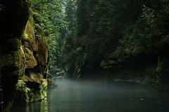 Towards the end of the boat trip (gornabanja) Tags: trees mist green water rock misty fog forest river dark boat moss nikon d70 foggy cliffs czechrepublic gorge bohemianswitzerland