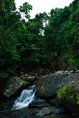 A Petite Waterfall (aitramah) Tags: travel trees plants tree nature water rain forest landscape puerto photography waterfall rainforest scenery san juan puertorico rico sanjuan waterfalls tropical