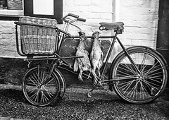 Butchers bicycle (Gill Stafford) Tags: white black game bicycle shop mono shropshire image pheasant ludlow butcher photograph delivery gillstafford
