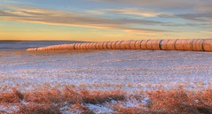 """""""Hey, we got hay."""" (westrock-bob) Tags: morning winter canada canon photography eos photo image pics hey picture ab pic photograph alberta hay allrightsreserved 6d threehills albertatourism canon6d tourismalberta westrockbob kneehillcounty canoneos6d bobcuthillphotographygmailcom bobcuthill"""