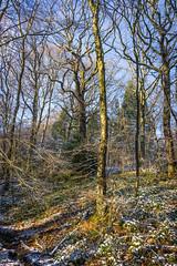 DSC00297 (Falcdragon) Tags: winter snow forest belgium liège sarttilman universityofliege ilce7 sonya7alpha