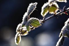 ICE AGE-9 (http://rafavicente.wix.com/vicar59) Tags: hielo mirandadeebroburgosespaña