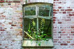 Blumen Fenster (zoomseb) Tags: flower window wall fenster blumen irgendwo drausen