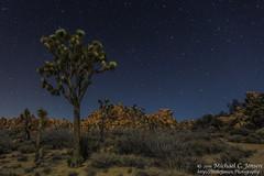 Moonlight On Joshua Tree (Michael C. Jensen) Tags: nightphotography stars landscape joshuatree moonlight redrocksjoshuatreenaitionalpark