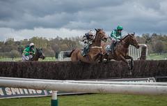 Racing at Uttoxeter Racecourse (Paula Cheese) Tags: uk sky horse man sport outside jumping nikon legs d750 80200 jokey mamal uttoxeterracecourse englandderbyshire paulacheesephotography