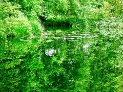 Green world . (Franc Le Blanc .) Tags: trees summer reflection green nature lumix panasonic haarsteegsewiel