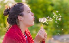 Seed the world (m3dborg) Tags: portrait flower macro girl portraits wind bokeh outdoor sony air blowing dandelion dust tamron 90mm f28 portrtt maskrosor maskrosfrn a77ii