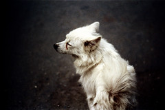 32-188 (ndpa / s. lundeen, archivist) Tags: winter dog color fall film animal 35mm village nick taiwan 1970s 1972 hualien 32 taiwanese eastcoast unidentified dewolf rurallife republicofchina easterncoast easterntaiwan nickdewolf photographbynickdewolf hualiencounty reel32
