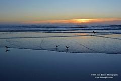 Land birds being shore birds (Krnr Pics) Tags: beach sunrise florida crescentbeach staugustine krnrpics kernerpics