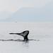 IWR-Juneau-090716 (23)