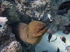 Underwater Friends-1 (Geoff_F) Tags: ocean underwater olympus borabora tg4