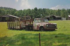 Pasteurized (Dave* Seven One) Tags: horses chickens abandoned truck fence junk rust cows decay farm rusty pickup international goats pasture forgotten barbedwire trailer v8 ih 392 345 pasteurized worktruck internationalharvester farmhand goosenecktrailer