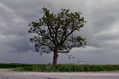 D933 - Marne (51) Grand Est (Didier Hubert Photography) Tags: road france tree countryside photographie carrefour route ciel signalisation crossroad nuages campagne arbre environnement marne grandest d933 didierhubert didierhubertphotographe