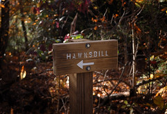 Trailmarker to Hawksbill Mountain 2014-1017 (LostPineJim) Tags: northcarolina linvillegorge burkecounty hawksbillmountain