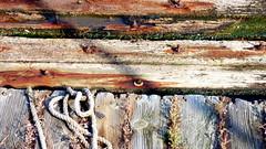 (mahler9) Tags: november autumn seaweed rotting rust wharf bolt algae decayed 2014 jaym mahler9 november2014