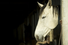Belle tte (Samuel Raison) Tags: horse cheval nikon loire nikond3 loire42 nikon2870200mmafsvr