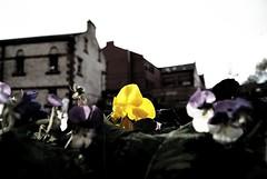 """I'll keep you safe."" (thePIRATESgospel) Tags: color yellow digital train scotland inspired theme ayr kilmarnock utopia edit ayrshire whereisjessicahyde"