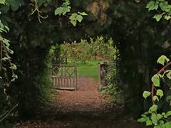 Vine portal (Dazzygidds) Tags: pretty vine richness nationaltrust discovery bounty warwickshire exciting fuit lightandshade possibility darkandlight coughtoncourtgarden