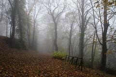 _N7M7298 (Giovanna Falasconi) Tags: alberi nebbia autunno marche bosco pesarourbino mombaroccio