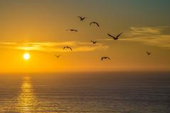 (RJ Richardson) Tags: ocean california sunset water birds silhouette waves flock ef24105mmf4isl canon6d