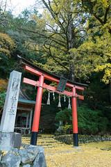 (GenJapan1986) Tags: 2014        japan kyoto shrine zf2 distagont225 autumn  carlzeiss