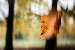 Autumn Fall (Vishca) Tags: autumn leaf canon450d