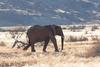 IMG_3767.jpg (The_Green_Ninja) Tags: elephant azn desert elephants namibia exodus