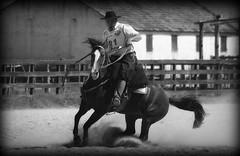 Na dana de um giro (Eduardo Amorim) Tags: brazil horses horse southamerica brasil criollo caballo cheval caballos cavalos pelotas pferde cavalli cavallo cavalo gauchos pferd riograndedosul pampa hest hevonen campanha brsil chevaux gaucho  amricadosul hst gacho  amriquedusud  gachos  sudamrica suramrica amricadelsur  sdamerika crioulo caballoscriollos criollos   costadoce americadelsud  crioulos cavalocrioulo americameridionale caballocriollo eduardoamorim cavaloscrioulos