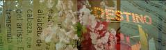 (intivisible) Tags: flowers flores film 35mm analgica doubleexposure letters destiny sheet destino letras analogic analgico dobleexposicin partitura