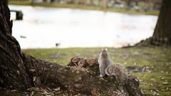 I think I should get a boat. (amish_shah) Tags: park water boston canon grey boat pond squirrel 50d