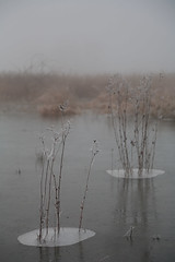 Icey Lake (james.taylor1987) Tags: winter plants mist lake ice canon frozen is frost britain 5d usm ef f4l 24105mm