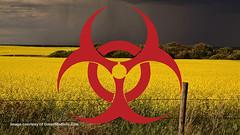 Canola-Contamination-GreenInfoMedia (tomwoods47) Tags: plants usa warning europe birth protest poison ban gmo monsanto despite bayer defects carcinogenic contaminate
