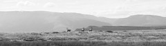 On The Plains Of Africa (Laurie Taylor.) Tags: africa travel wild summer sky sun mountains animals nikon south horns plains plain gemsbok gemsbuck
