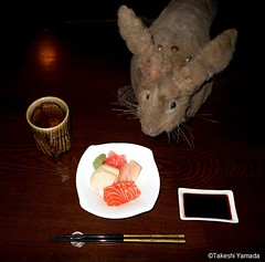 Dr. Takeshi Yamada and Seara (Coney Island Sea Rabbit) at the Shinjuku Japanese Restaurant (Beffet) in Brooklyn, NY on April 28, 2016.  20160428Thu DSCN5147=3030C.. assorted sashimi (6) (searabbits23) Tags: ny newyork sexy celebrity rabbit art hat fashion animal brooklyn sushi asian coneyisland japanese star restaurant tv google king artist dragon god manhattan famous gothic goth uma ufo pop taxidermy vogue cnn tuxedo bikini tophat unitednations playboy entertainer oddities genius mermaid amc mardigras salvadordali performer unicorn billclinton seamonster billgates aol vangogh curiosities sideshow jeffkoons globalwarming mart magician takashimurakami pablopicasso steampunk damienhirst cryptozoology freakshow seara immortalized takeshiyamada roguetaxidermy searabbit barrackobama ladygaga climategate  manwithrabbit