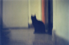 it's being (BigBSTRD) Tags: blur analog cat 120film analogphotography mamiya645 expiredfilm 50asa filmphotography agfacolorultra