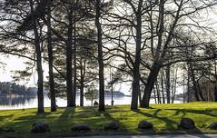 Evening green (Joni Mansikka) Tags: trees sea nature suomi finland landscape evening seaside spring outdoor may silhouettes balticsea rauma 18125mmf3556dc