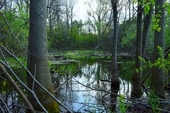 Bannister Lake, Ontario (douglasmmiller810) Tags: lake fishing hiking swamp brock pike bannister hikeing