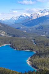 Peyto Lake! (Scott_Keenleyside) Tags: trees lake canada mountains landscape landscapes lakes alberta banff banffnationalpark peytolake peyto landscapephotography