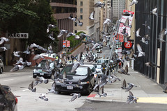 flinchingly clotured blasts (bhautik joshi) Tags: sf sanfrancisco california street people us downtown unitedstates candid pigeons flock streetphotography bayarea fromthehip sfist bhautikjoshi