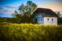 New barley and old mill (CHCaptures) Tags: old blue house green mill field barley landscape austria mhle feld landschaft gerste sonyilce7 sel2470z