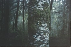 (maple nightingale) Tags: tree green forest moss hike lichen pnw yashica damp yashicafx3