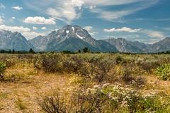 Mount Moran and Cascade Canyon (greggohanian) Tags: wildflowers mountmoran grandtetons tetons cascadecanyon