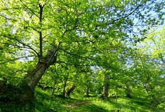 IMG_0002x (gzammarchi) Tags: italia natura albero montagna paesaggio monti monocrome castagneto firenzuolafi