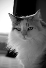 A Kinder Karma (The Good Brat) Tags: portrait bw pet cat us feline karma