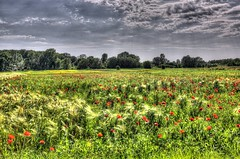 Ponceau field (Majorimi) Tags: blue red sky flower color colour tree green nature beautiful field grass digital canon eos nice flora colorful hungary calm poppy hdr ponceau 70d