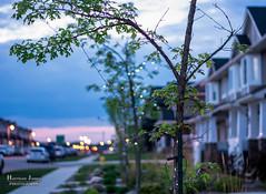 TreeLights-1 (glory10299) Tags: urban colour tree lights